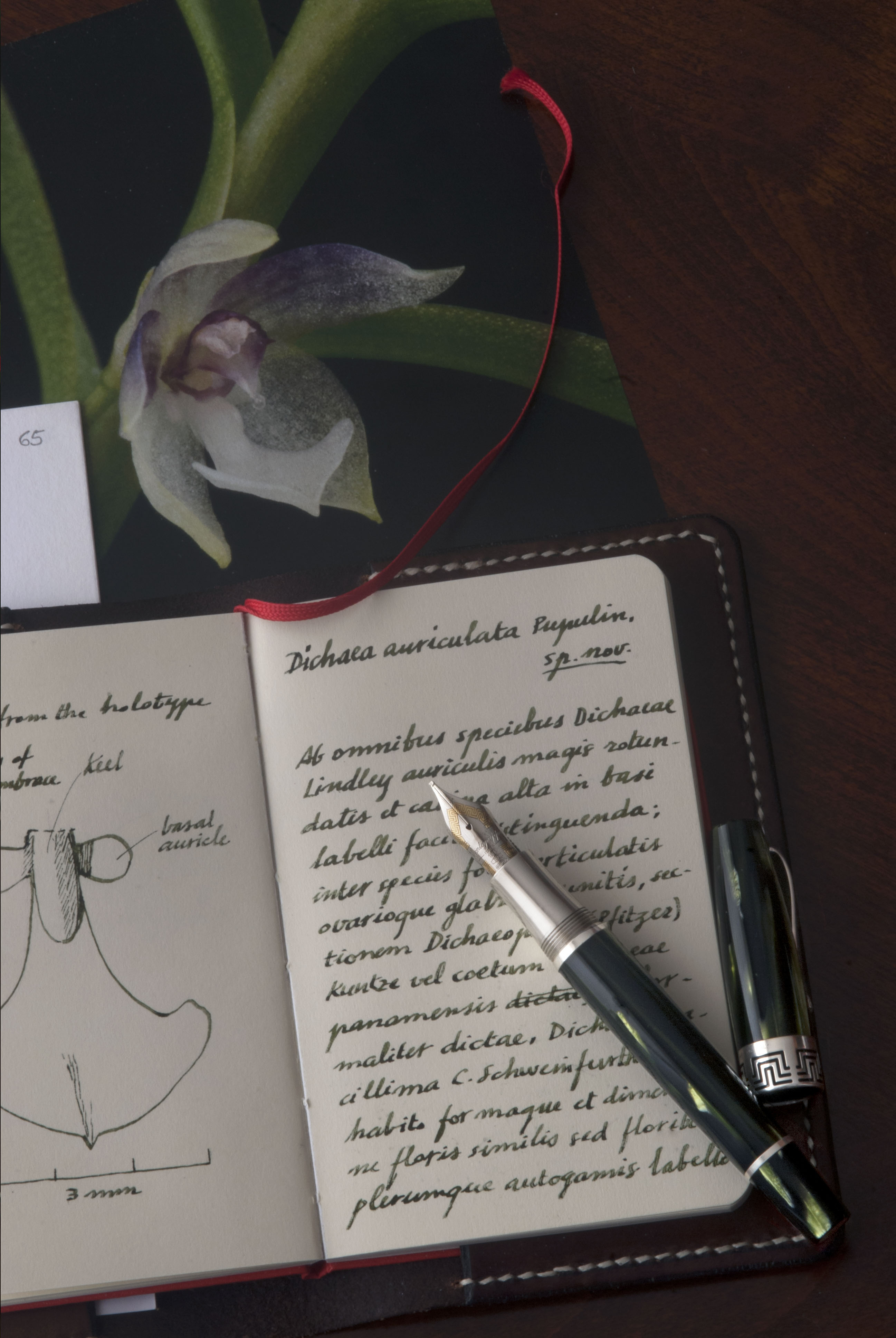 Montegrappa Extra 1930 and new orchid (2).jpg