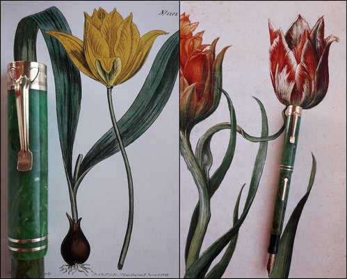 1. WETC. tulip clip and tulips.jpg